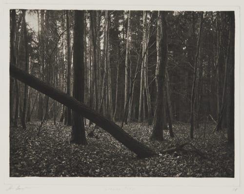 Leaning Tree, Saint Prex Goodman, Jon  (American, b.1953)