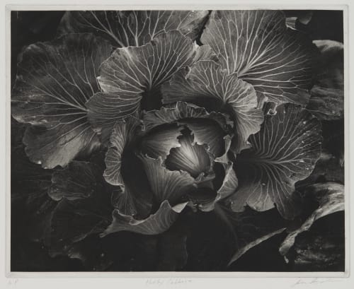Hadley Cabbage Goodman, Jon  (American, b.1953)
