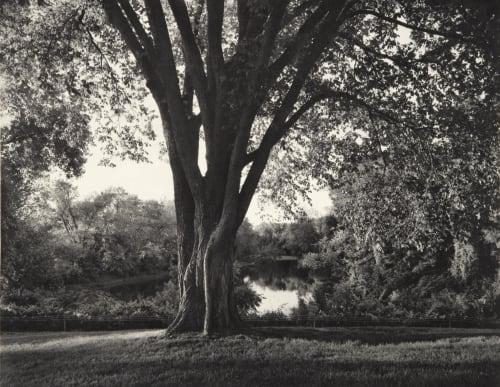 Elm Tree Goodman, Jon  (American, b.1953)