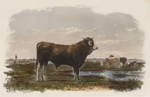 Taureau Landais Tournachon, Adrien  (French, 1820-1910)