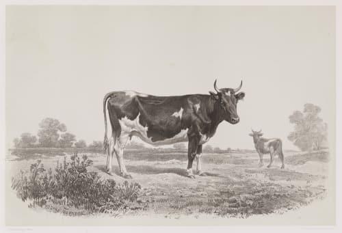 Vache du Jutland Tournachon, Adrien  (French, 1820-1910)