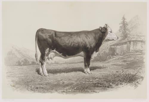 Vache de Berne Tournachon, Adrien  (French, 1820-1910)