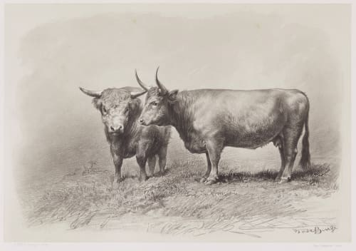 Vache de West-Highland Tournachon, Adrien  (French, 1820-1910)