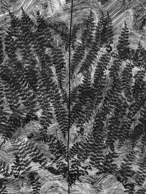 Fern #2 Morell, Abelardo  (American, b.b.1948)