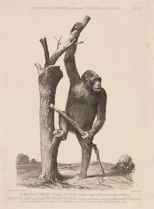 PL. XIII Mammiferes Primates Mante, Louis-Amédée  (French, 1826-1913)