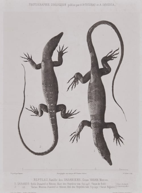 Reptiles. Famille des Varaniens. Bisson, Louis-Auguste  (French, 1814-1876)Bisson, Auguste-Rosalie   (French, 1826-1900)