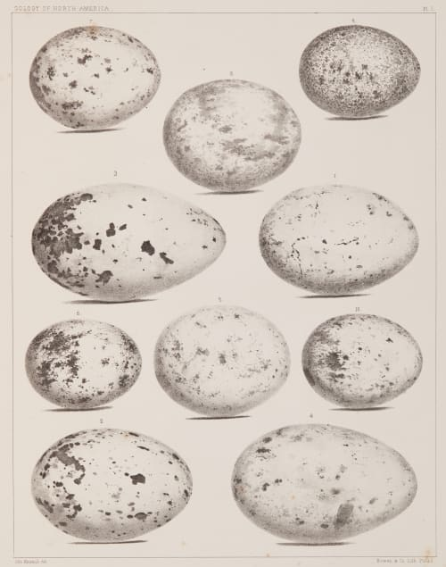 Plate I Bradford, Lodowick  (American, 1820-1885)