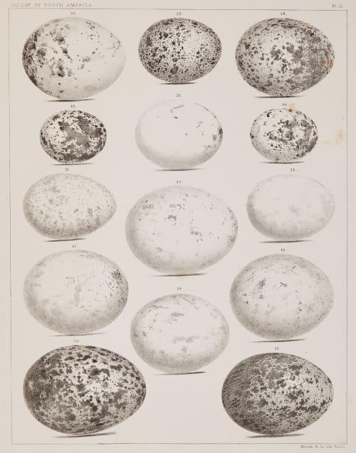 Plate III Bradford, Lodowick  (American, 1820-1885)