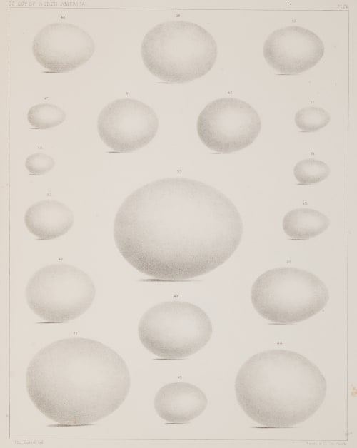 Plate IV Bradford, Lodowick  (American, 1820-1885)