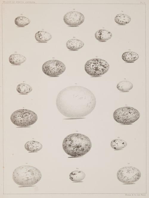 Plate V Bradford, Lodowick  (American, 1820-1885)