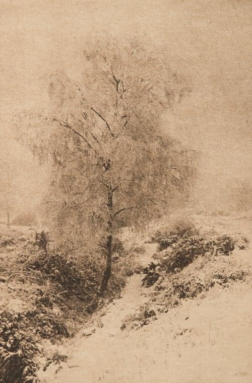 Les Bouleaux argentés Briant, Rowland  (English, b.active 1890s)
