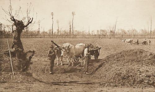 Attelage de boeufs près Pavie Bucquet, Antoinette  (French, b.active 1890s)