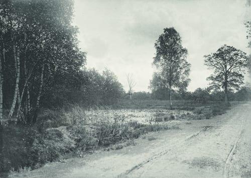 Crépuscule en Foret Ribes-Christofle, F. de  (French)