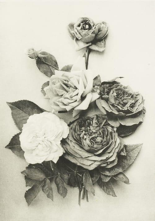 Roses Stockert, Robert von  (Austrian)