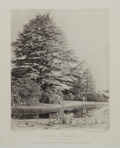 Cedars Fenton, Roger  (British, 1819-1869)