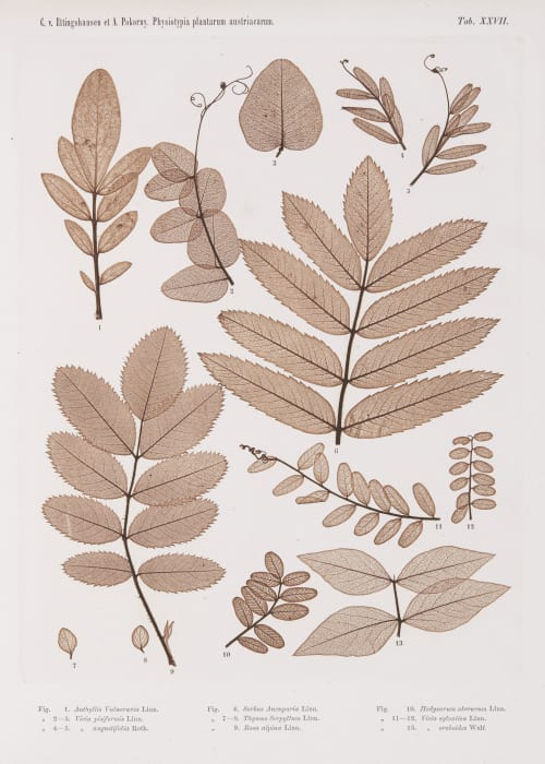 Tab. XXVII Auer, Alois  (Austrian, 1813-1869)