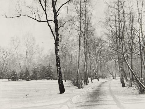 Birkenstand im Winter Rau, Otto  (German, 1856-1934)