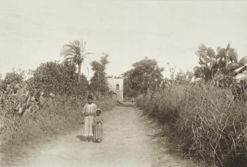 Orange Groves at Jaffa Shadbolt, Cecil  (British, 1859–1892)