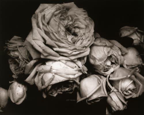 Heavy Roses Steichen, Edward  (American, 1879-1973)