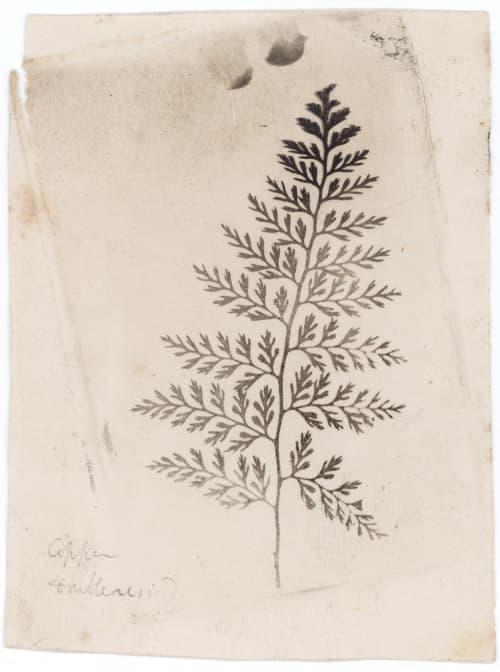 Fern Talbot, William Henry Fox  (British, 1800-1877)