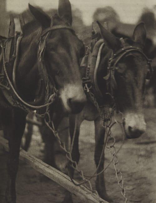 Plate 15 Ulmann, Doris  (American, 1882-1934)