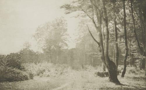 Buchenwald auf Rügen Henneberg, Hugo  (Austrian, 1863-1918)