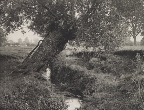 """""""A Willow Grows Aslant The Brook"""" Williams, James Leon  (American, 1852-1932)"""