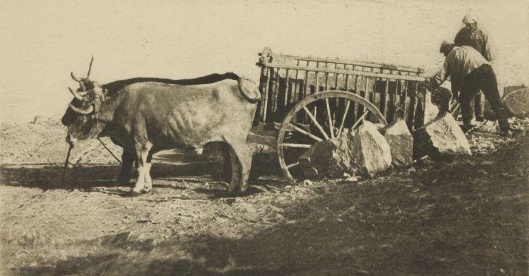 Bullock Cart – Toledo