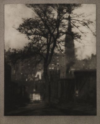 A Tree in Greyfriars Churchyard, Edinburgh
