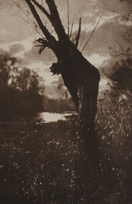 Herbstabend Am Moor