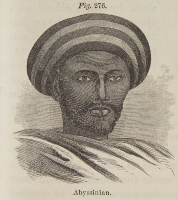 Fig. 276. Abyssinian