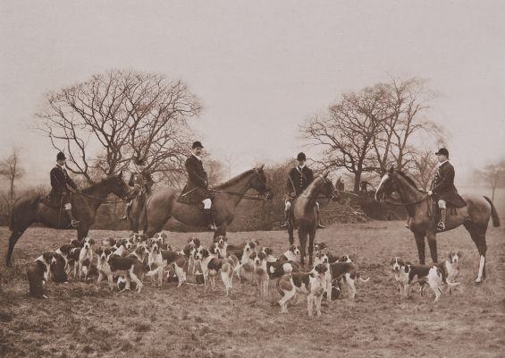 The Earl Fitzwilliam's (The Grove) Hounds, 1908