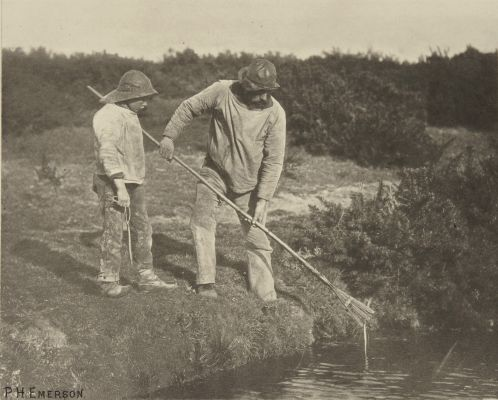 Eel-Picking in Suffolk Waters
