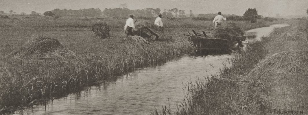 The Sedge Harvest