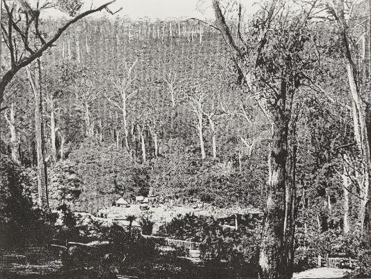 Cottage et camp au milieu des forêts d'eucalyptus