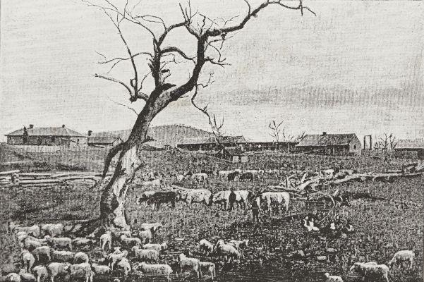 Une station de bestiaux au moment du recensement