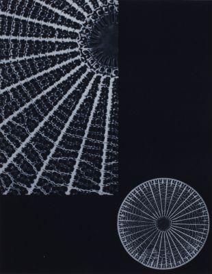 Plancche XVIII Diatomée