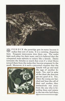 Perdix the Partridge