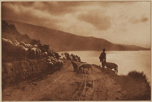 Sheep Study Near Bordyhesa