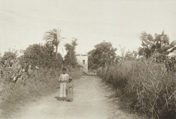 Orange Groves at Jaffa