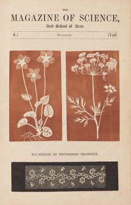 Facsimiles of Photogenic Drawings