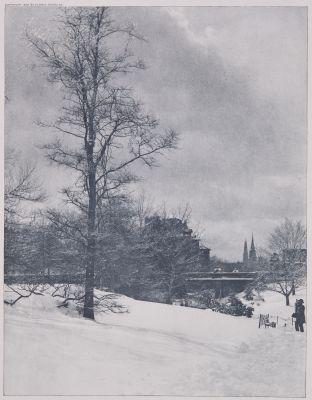 A Winter Sky – Central park