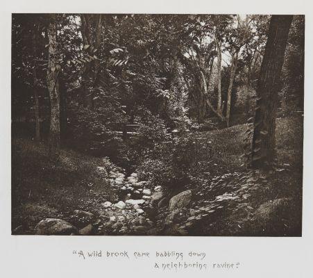 A Wild Brook