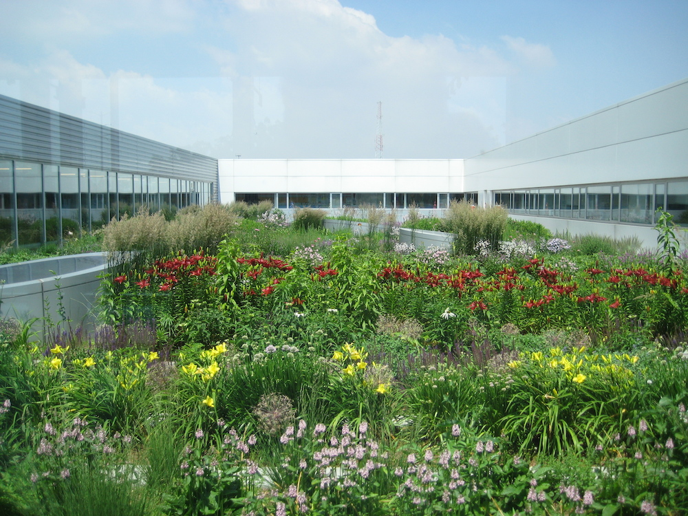 10 Corporate roof vegetable garden
