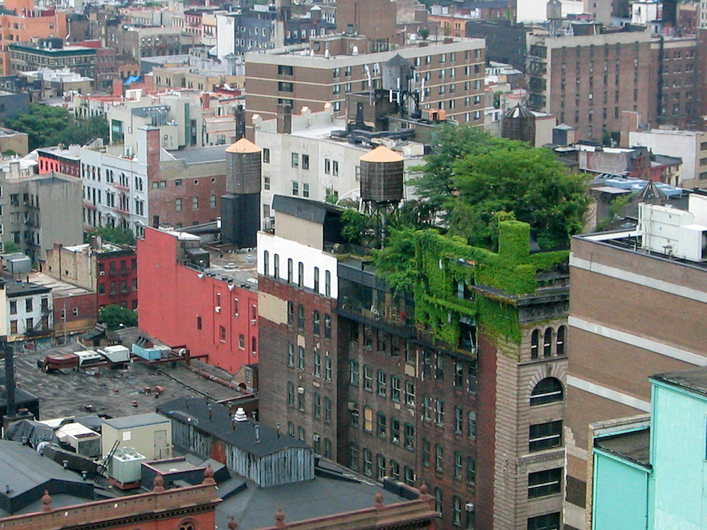 New York intensive roof garden