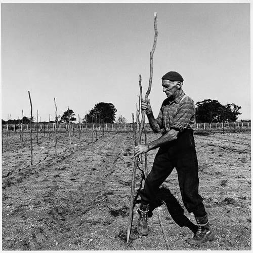 Corbans' Vineyard Jim Thompson 1967