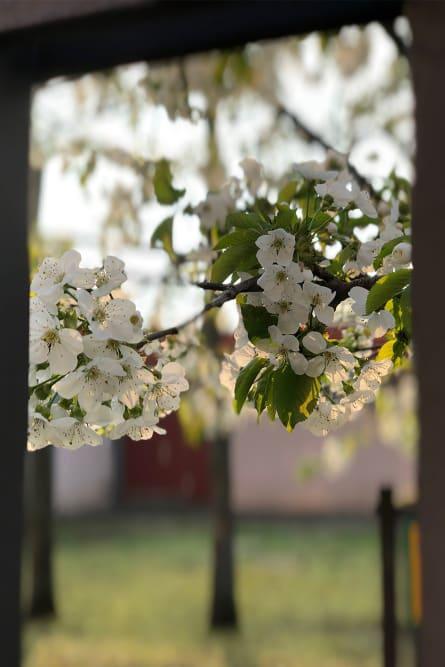 Blossom in backlighting