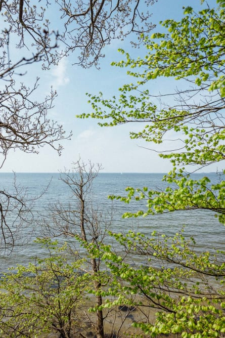 Looking through the trees onto the sea