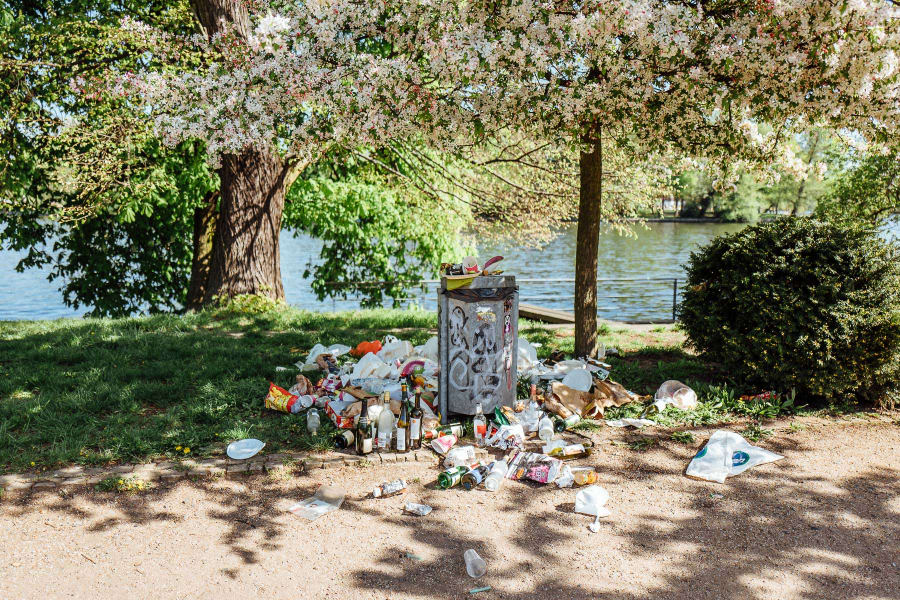 A jam-packed trash can under a tree with cherry blossoms.