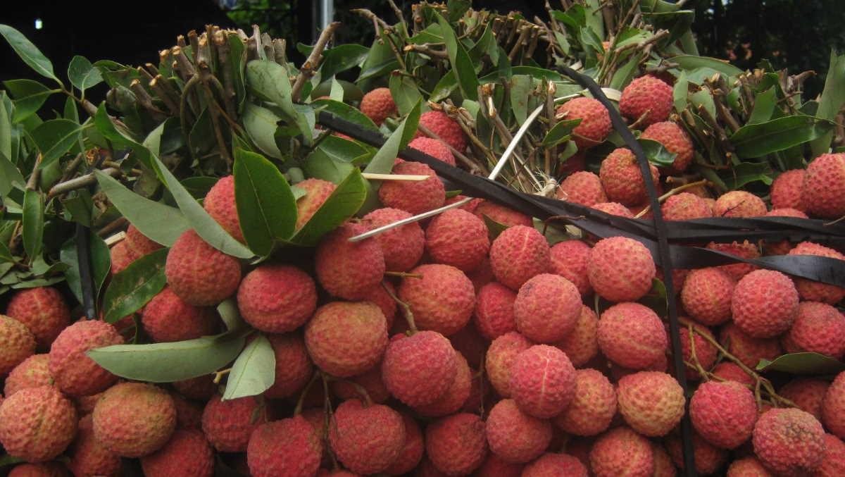 Vietnam litchi fruit